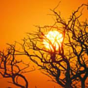 Keawe Tree At Sunset Art Print