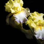 Keep Smiling Iris  Art Print