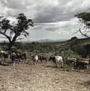 Kenya: Cattle, 1936 Art Print