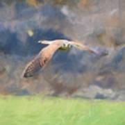 Kestrel Flying Art Print