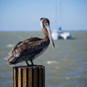 Key Largo Florida Pelican Yacht Art Print