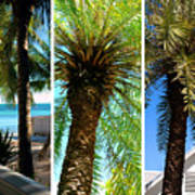 Key West Palm Triplets Art Print by Susanne Van Hulst