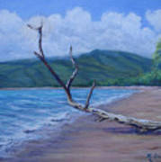 Kihei Beach Tree Art Print