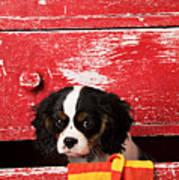 King Charles Cavalier Puppy  Art Print