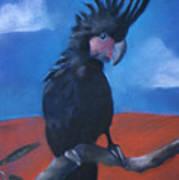 King Of Cockatoos Art Print