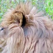 King Of The Jungle Profile  Art Print