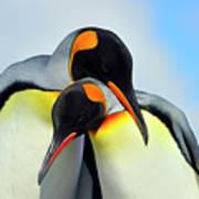 King Penguin Art Print by Tony Beck