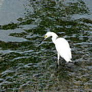 Kingston Jamaica Egret Art Print