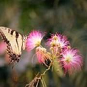 Kiss Of Butterfly Art Print