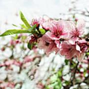 Kiss Of Spring Art Print