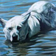 Kita Swimming The Platte Art Print