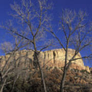 Kitchen Mesa And Bare Cottonwood Trees Art Print