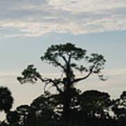 Kite In The Tree Art Print