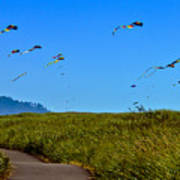 Kites Art Print by Robert Bales