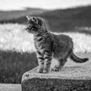 Kitten 2 Art Print