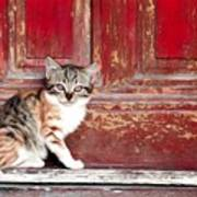 Kitten By Red Door Art Print
