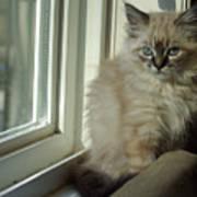 Kitten Daydreams Art Print