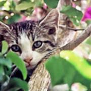 Kitten Hiding Out Art Print