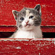 Kitten In Red Drawer Art Print by Garry Gay