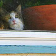 Kitten In The Window 2 Art Print