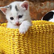 Kitten In Yellow Basket Print by Garry Gay