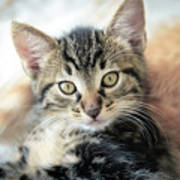 Kitten Looking Art Print