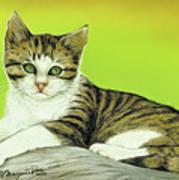 Kitten On Rock Art Print