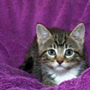 Kitten, Purr-fect In Purple Art Print