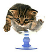 Kitten Sits In A Glass  Art Print