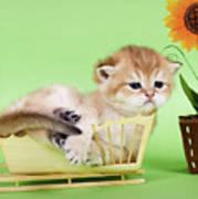 Kitten With Flover Art Print