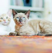 Kitties Sisters Art Print by Cindy Loughridge