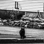 Kitty Across The Street Black And White Art Print