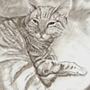 Kitty Cat Art Print