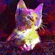 Kitty Cat Kitten Pet Animal Cute  Art Print