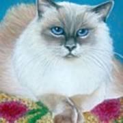 Kitty Coiffure Art Print