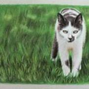 Kitty Grass Art Print