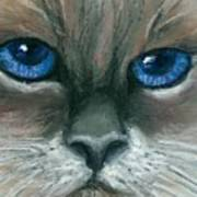 Kitty Starry Eyes Art Print