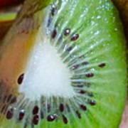 Kiwi Seed Display Art Print