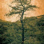 Knarly Tree Art Print