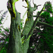 Knotty Tree Art Print