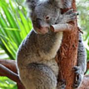 Koala Mama Art Print