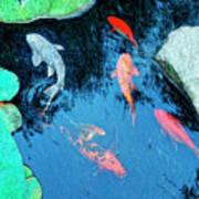 Koi Pond 1 Art Print