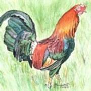 Kokee Rooster Art Print