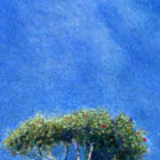 Kokee Trees Art Print
