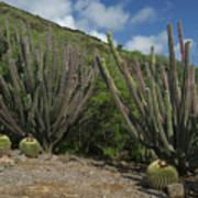 Koko Crater Cacti Art Print
