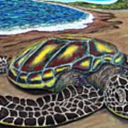 Kona Turtle Art Print