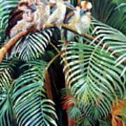 Kookaburra Perch Art Print
