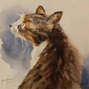 Kotora - My Parents Cat Art Print