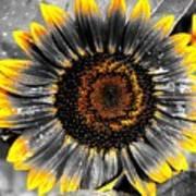 Krypton's Sun Flower Bwy Art Print