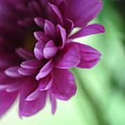 La Fleur De L' Amour Art Print